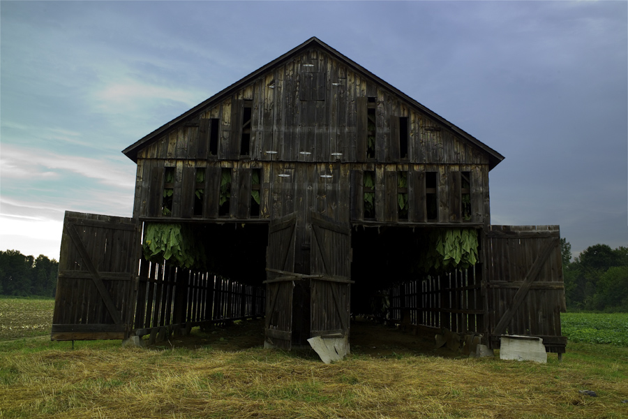 Tobacco Barn with tobacco