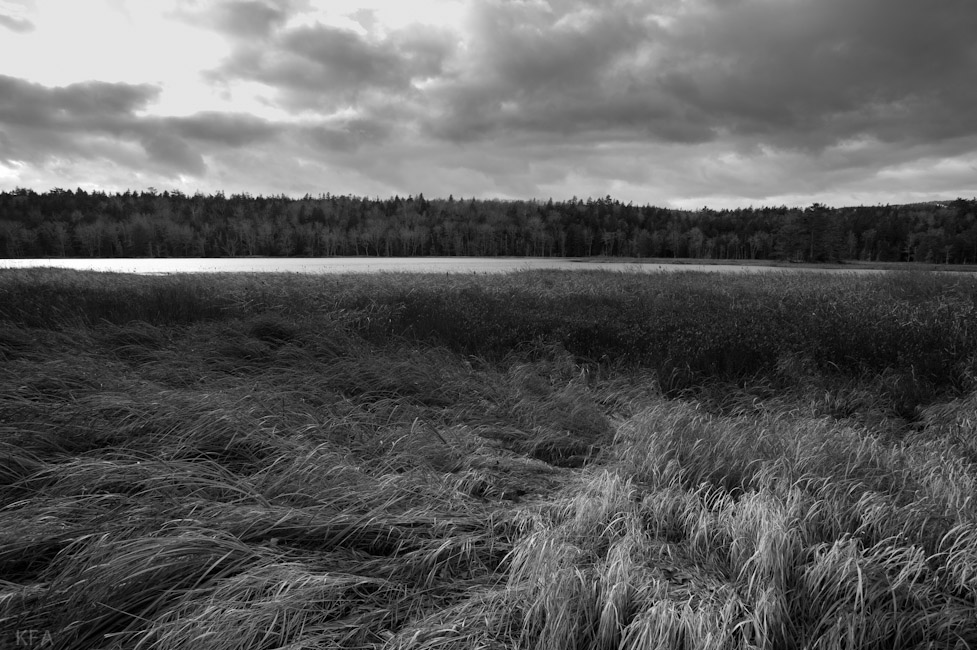 Long Pond Grass and Storm