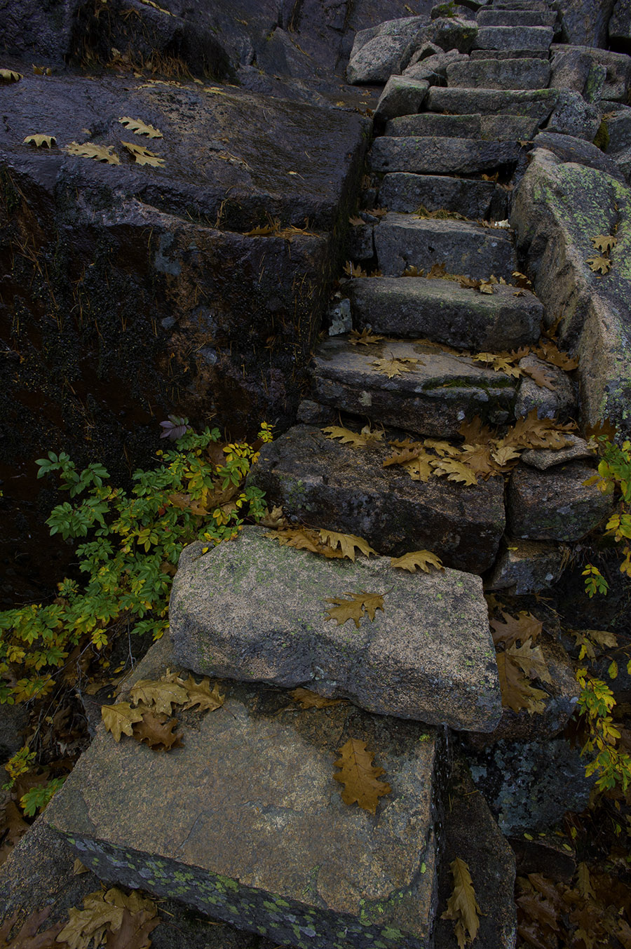 Stairs on Dorr Mountain 4