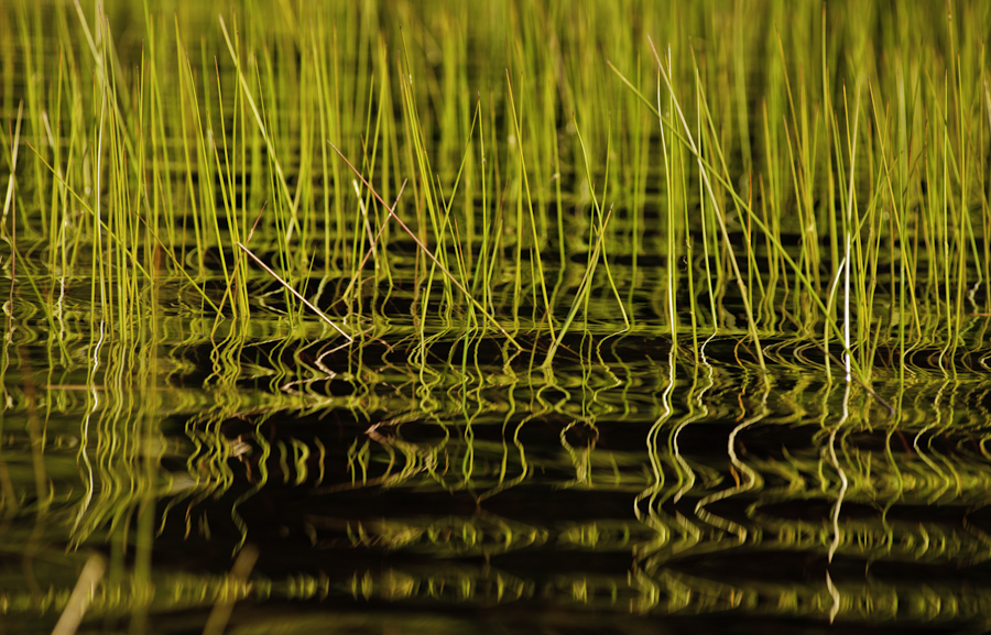 Eagle Lake Grass 2