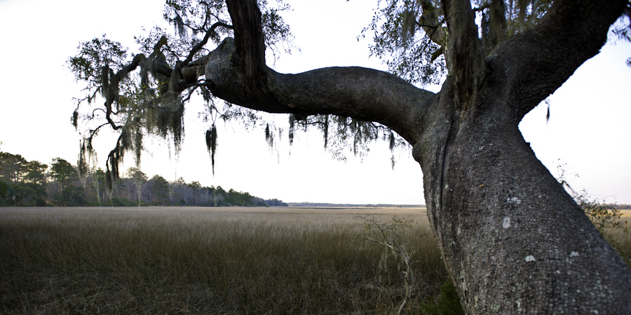 Marsh Near Altamaha
