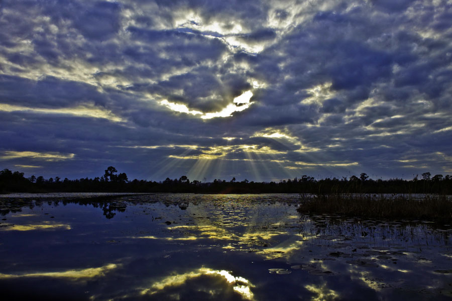 Okefenokee reflection, Jacobs Ladder