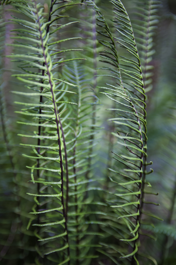 Keeah Beach Ferns 3409