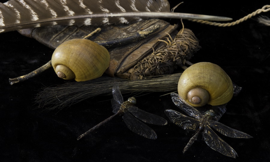 Dragonflies and Shells