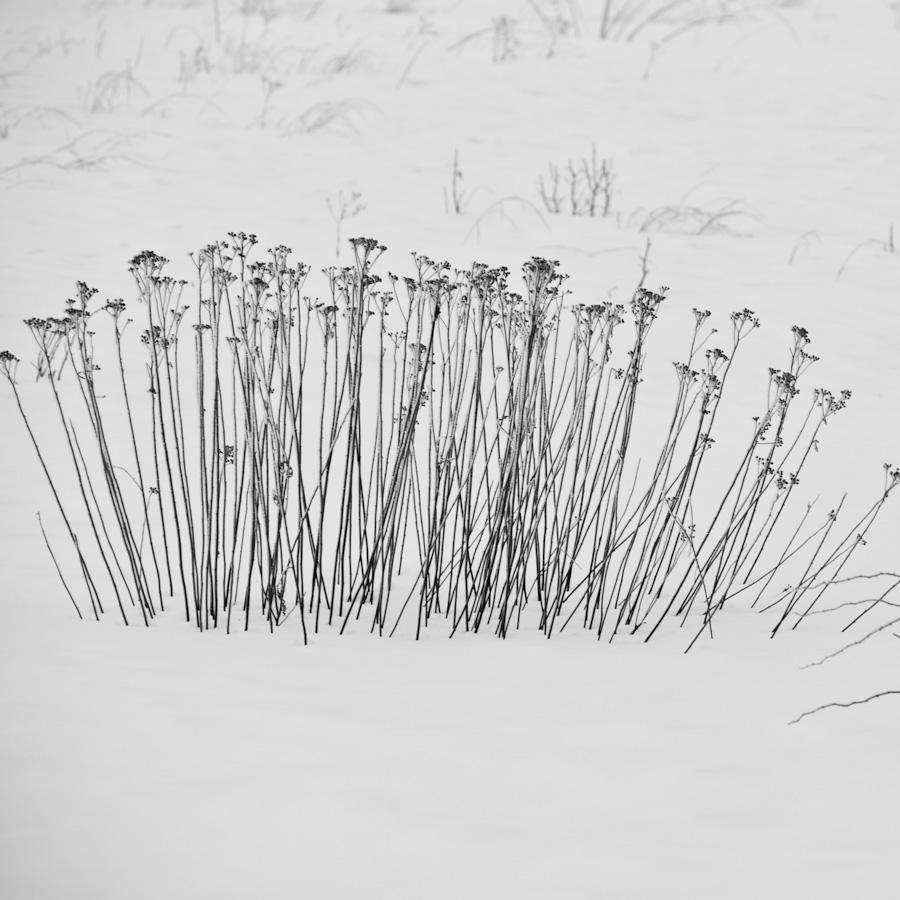 WInter Seedheads 2381