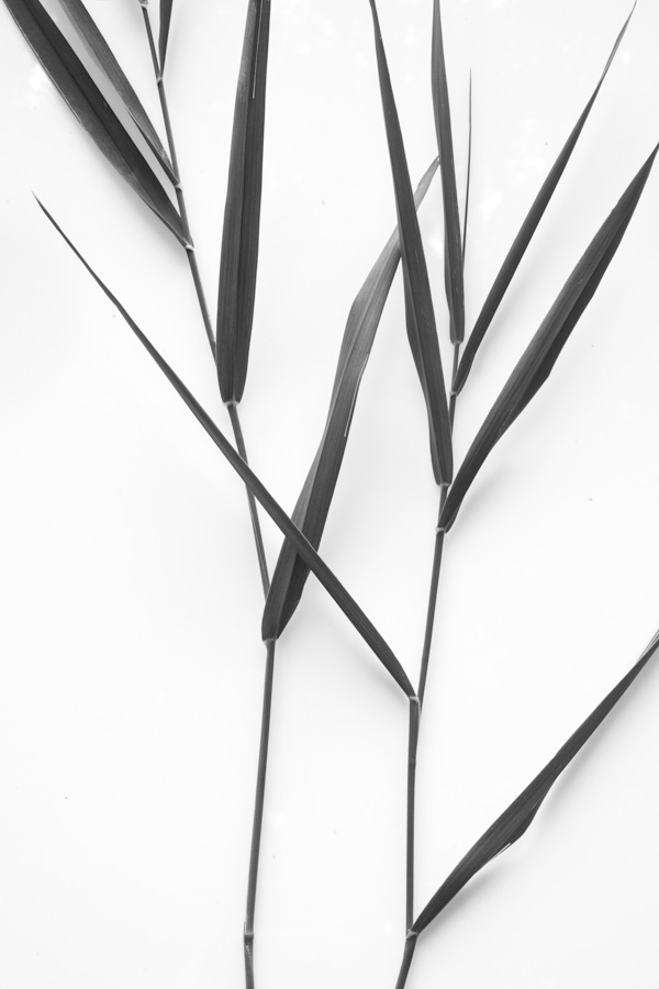 Grass Stems 014