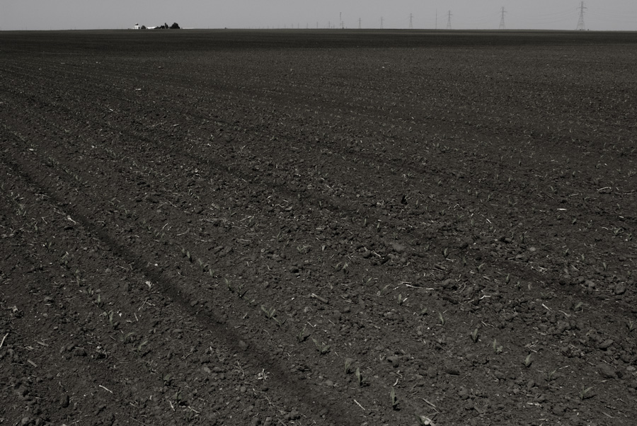 Bare Ground 0754